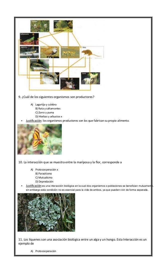 Ensayo 4 Slide 3
