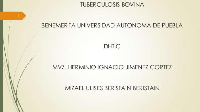 TUBERCULOSIS BOVINA 1  BENEMERITA UNIVERSIDAD AUTONOMA DE PUEBLA DHTIC MVZ. HERMINIO IGNACIO JIMENEZ CORTEZ  MIZAEL ULISES...