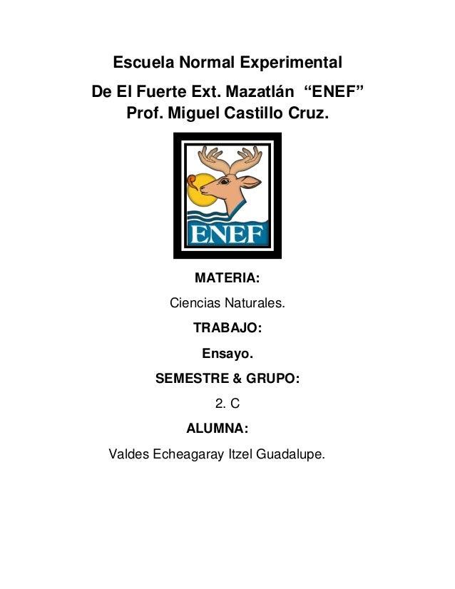 """Escuela Normal ExperimentalDe El Fuerte Ext. Mazatlán """"ENEF""""Prof. Miguel Castillo Cruz.MATERIA:Ciencias Naturales.TRABAJO:..."""