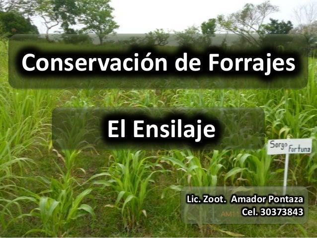 Conservación de Forrajes       El Ensilaje               Lic. Zoot. Amador Pontaza                            Cel. 30373843