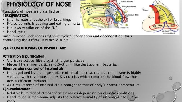 ANATOMY AND PHYSIOLOGY OF EAR, NOSE, THROAT and NEWER INVESTIGATION …