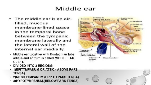 Anatomy And Physiology Of Ear Nose Throat And Newer
