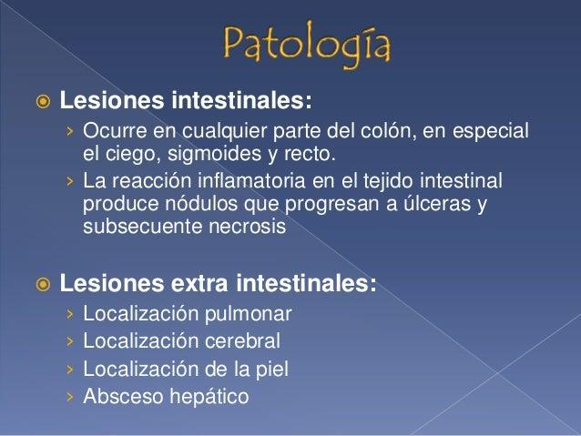  Destrucción de la mucosa intestinal Diarrea sanguinolenta y/o con moco Dolor abdominal Nauseas y vomito Lengua subur...