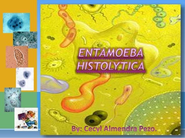 protozoario comensal del intestino grueso, que en ocasiones invade la mucosa intestinal, y puede diseminarse por vía hemát...