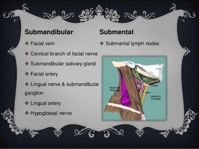 anatomy of oral cavity & pharynx