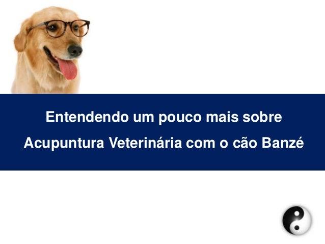 Entendendo um pouco mais sobreAcupuntura Veterinária com o cão Banzé