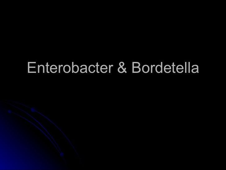 Enterobacter & Bordetella