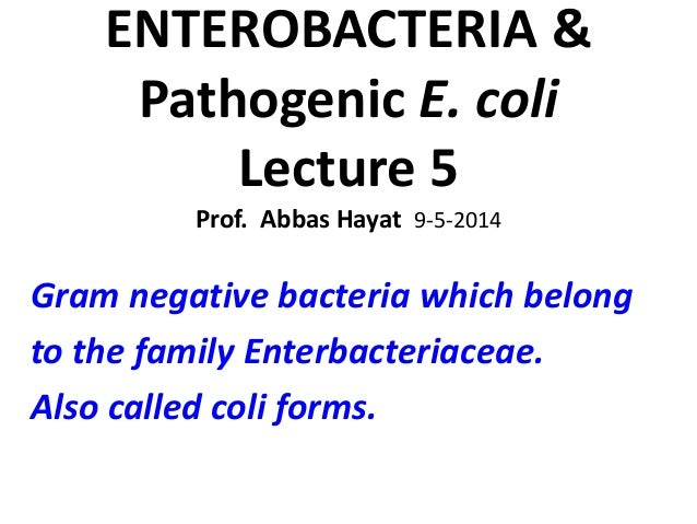 ENTEROBACTERIA & Pathogenic E. coli Lecture 5 Prof. Abbas Hayat 9-5-2014 Gram negative bacteria which belong to the family...