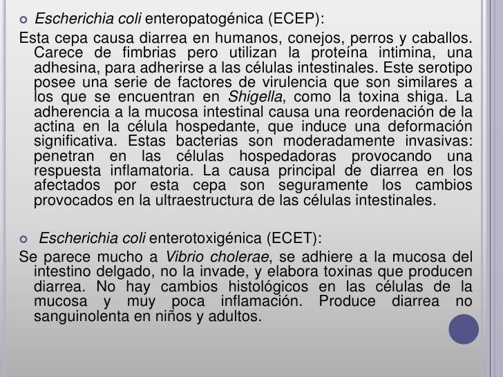  Escherichia coli enteropatogénica (ECEP):Esta cepa causa diarrea en humanos, conejos, perros y caballos.  Carece de fimb...