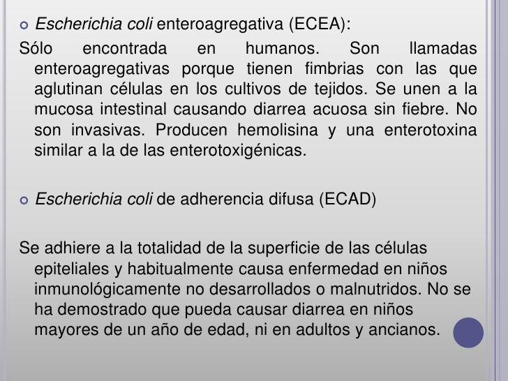 Escherichia coli enteroagregativa (ECEA):Sólo    encontrada      en     humanos.    Son     llamadas enteroagregativas po...