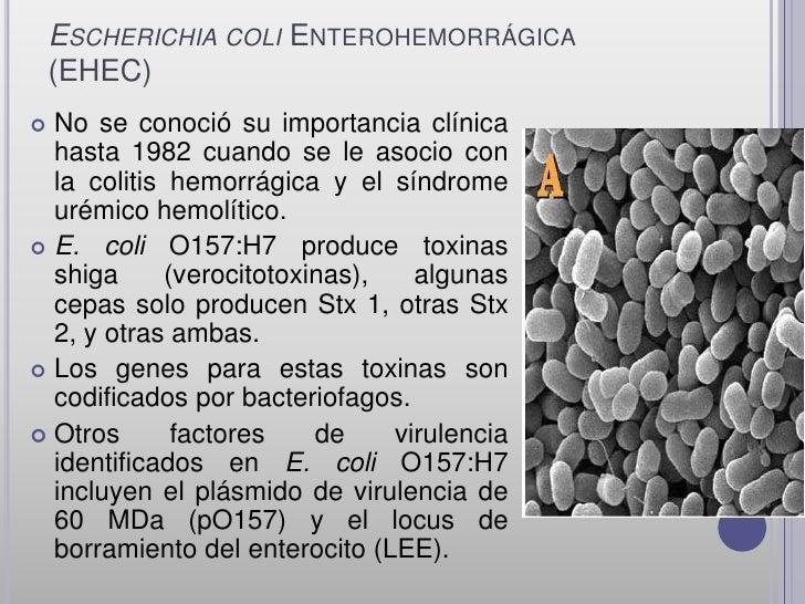 ESCHERICHIA COLI ENTEROHEMORRÁGICA    (EHEC) No se conoció su importancia clínica  hasta 1982 cuando se le asocio con  la...