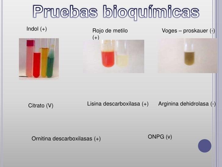 Indol (+)                 Rojo de metilo             Voges – proskauer (-)                          (+)Citrato (V)        ...