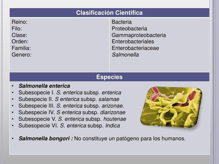 Clasificación CientíficaReino:                                    BacteriaFilo:                                     Proteo...