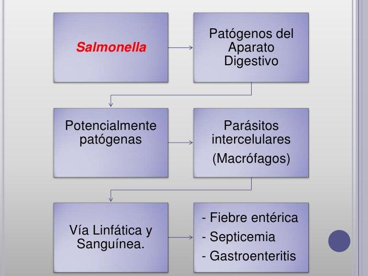 Patógenos del Salmonella           Aparato                     DigestivoPotencialmente       Parásitos  patógenas        i...