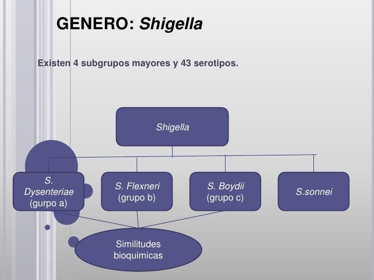 GENERO: Shigella•Las especies de shigella pueden sospecharse en cultivos (nofermentadores de lactosa y bioquímicamente ine...