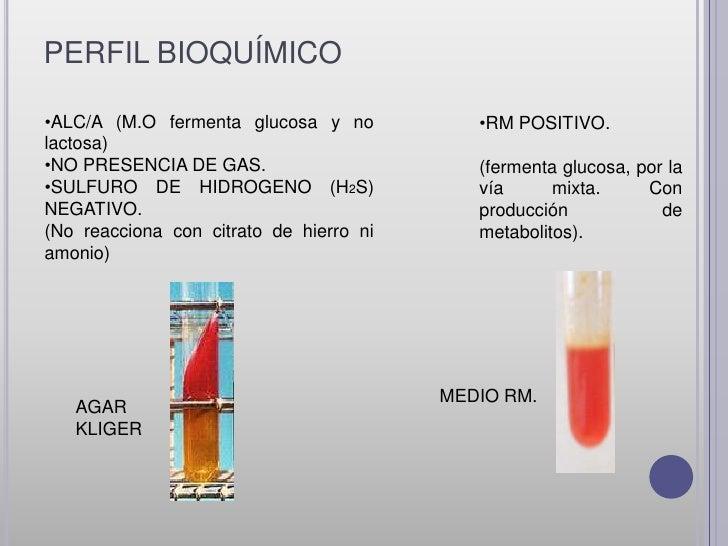 •VP NEGATIVO.                     •INDOL POSITIVOEs la busqueda de diacetil           /NEGATIVO.= producto final del aceti...