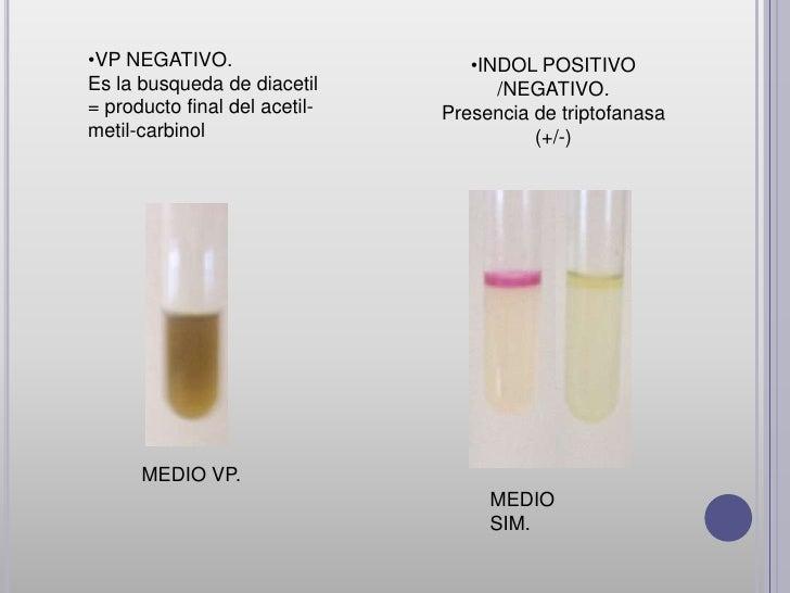 •CITRATO              •FENIL ALANINANEGATIVO.             NEGATIVO.(no utiliza sales     (capacidad de la bacteriaamonio c...