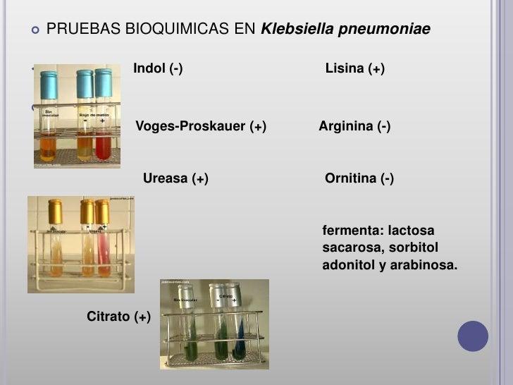 Klebsiella OxytocaKlebsiella oxytoca es una especieGram-negativa,       estrechamenterelacionadas con K. pneumoniae dela q...