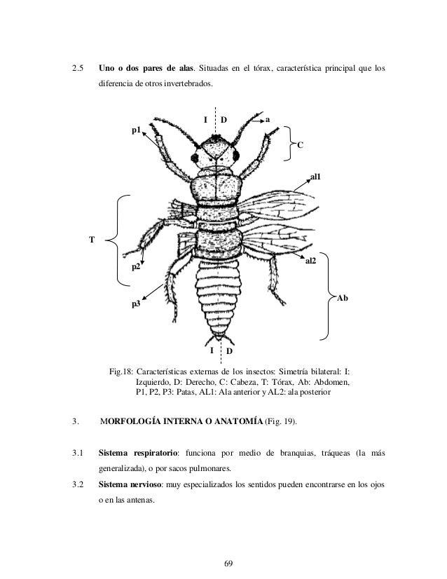 Entomologia Morfologia Y Fisiologia De Los Insectos Un