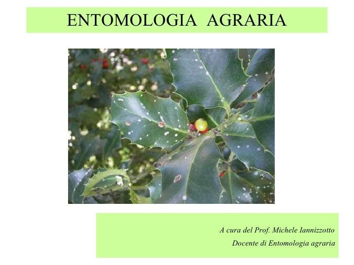 Entomologia generale