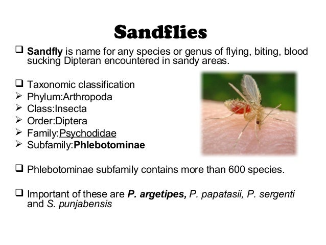 ... Insecticides; 24. Sandflies  Sandfly Is Name ...