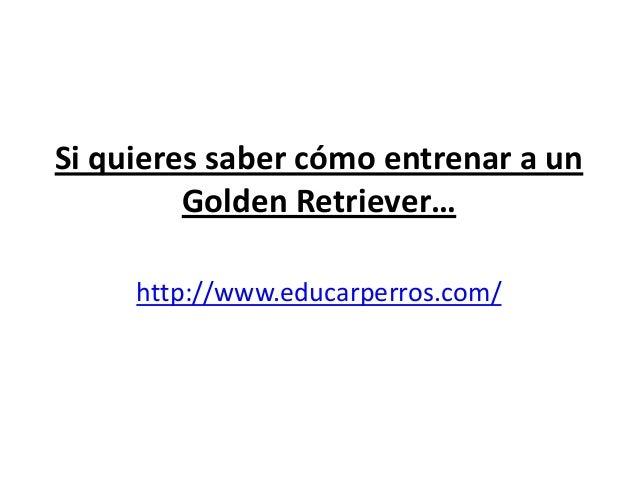 Si quieres saber cómo entrenar a un         Golden Retriever…     http://www.educarperros.com/