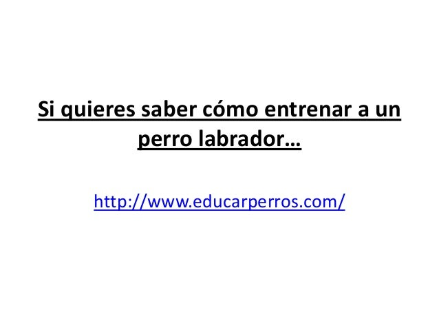 Si quieres saber cómo entrenar a un          perro labrador…     http://www.educarperros.com/