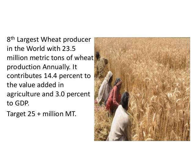 TOP WHEAT PRODUCER 8th Largest Wheat producer in the World with 23.5 million metric tons of wheat production Annually. It ...