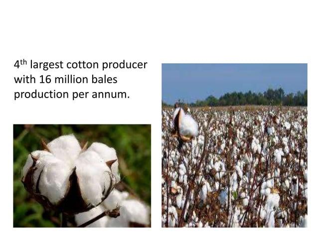 COTTON PRODUCTION 4th largest cotton producer with 16 million bales production per annum.