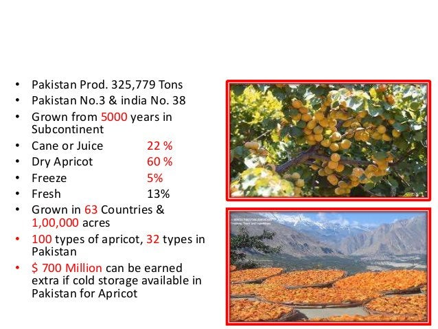 APRICOT, Pakistan is No. 3 in the World • Pakistan Prod. 325,779 Tons • Pakistan No.3 & india No. 38 • Grown from 5000 yea...
