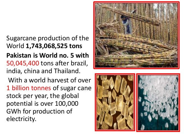 SUGARCANE Sugarcane production of the World 1,743,068,525 tons Pakistan is World no. 5 with 50,045,400 tons after brazil, ...
