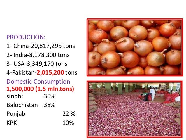 PAKISTAN4th largest producer of onion in the World. PRODUCTION: 1- China-20,817,295 tons 2- India-8,178,300 tons 3- USA-3,...