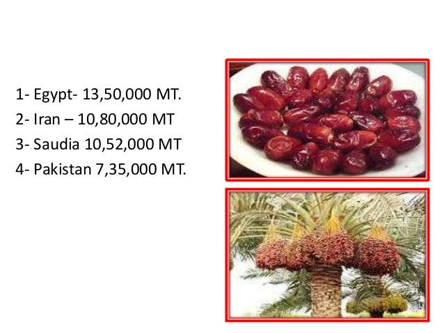 PAKISTAN- 4thlargest producer of Date palm in World 1- Egypt- 13,50,000 MT. 2- Iran – 10,80,000 MT 3- Saudia 10,52,000 MT ...