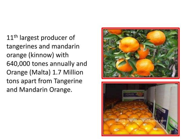 TANGERINE, ORANGE (Malta) MANDARIN ORANGE(Kinnow) 11th largest producer of tangerines and mandarin orange (kinnow) with 64...