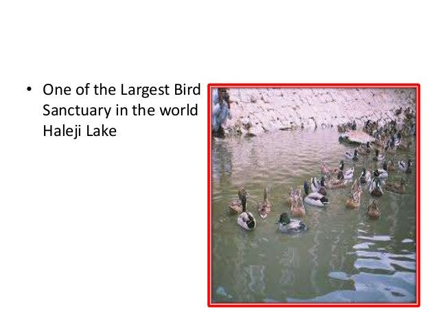 LARGEST BIRD SANCTUARY IN THE WORLD • One of the Largest Bird Sanctuary in the world Haleji Lake