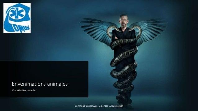 Envenimations animales Made in Normandie Dr Arnaud Depil Duval - Urgences Evreux Vernon