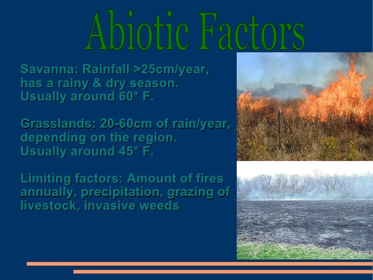 What Are the Biotic and Abiotic Factors of Temperate Grasslands?