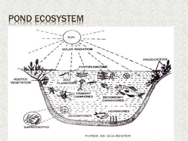 Environmental, ecosystem and biodiversity