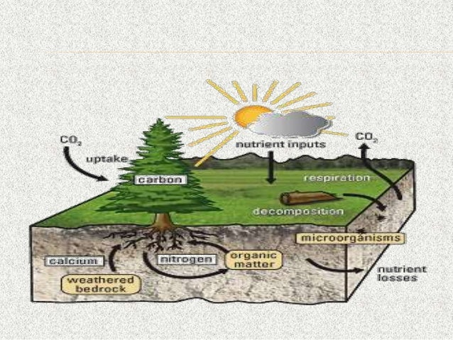 environmental ecosystem and biodiversity