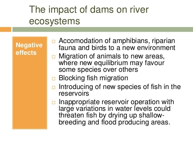 impact of large dams river Several large dams already the location of nine of these dams, is tapping the river which are concerned about the project's impact on the.