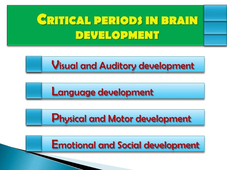Environmental influences on the development of the brain for Motor and social development of a 7 year old