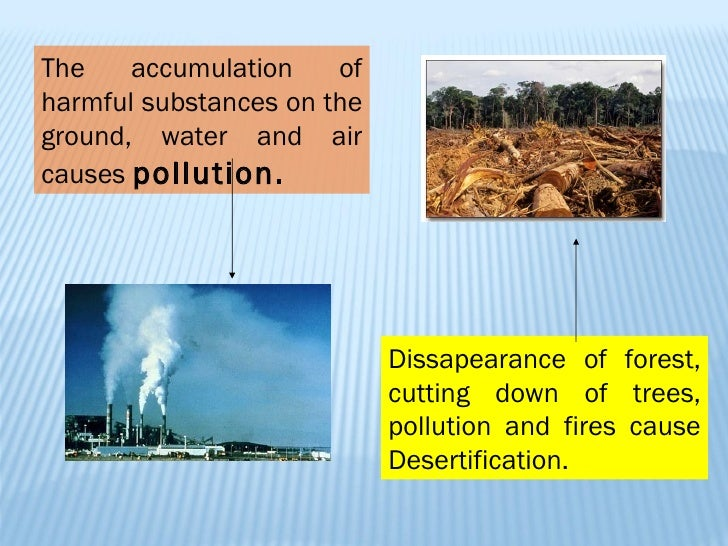 environmental problem and solutions essay