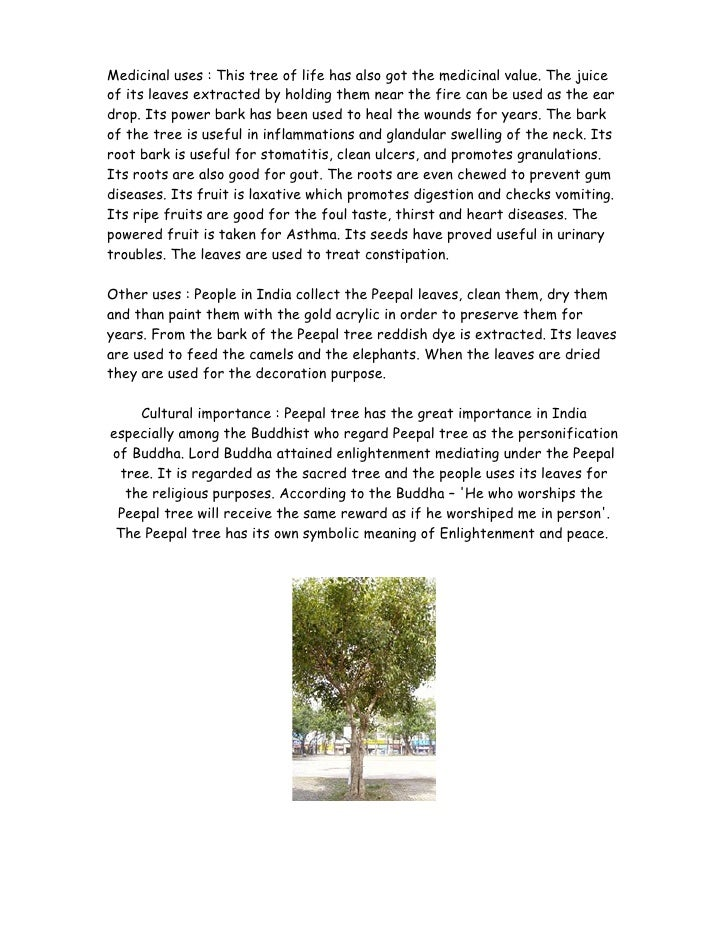 essay on peepal tree in english
