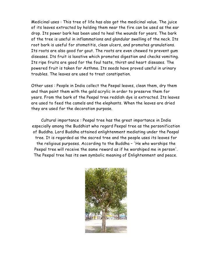 peepal tree essay in english