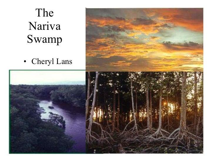 The Nariva Swamp <ul><li>Cheryl Lans </li></ul>