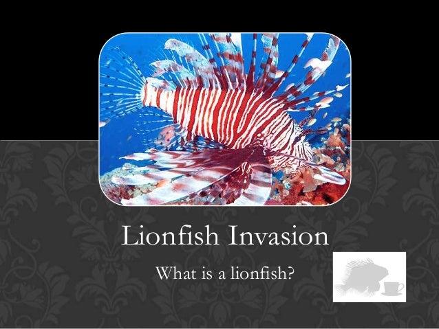 LIONFISH INVASIONLionfish InvasionWhat is a lionfish?