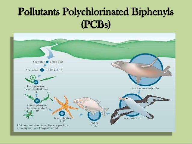 Effects of polychlorinated biphenyl pcb