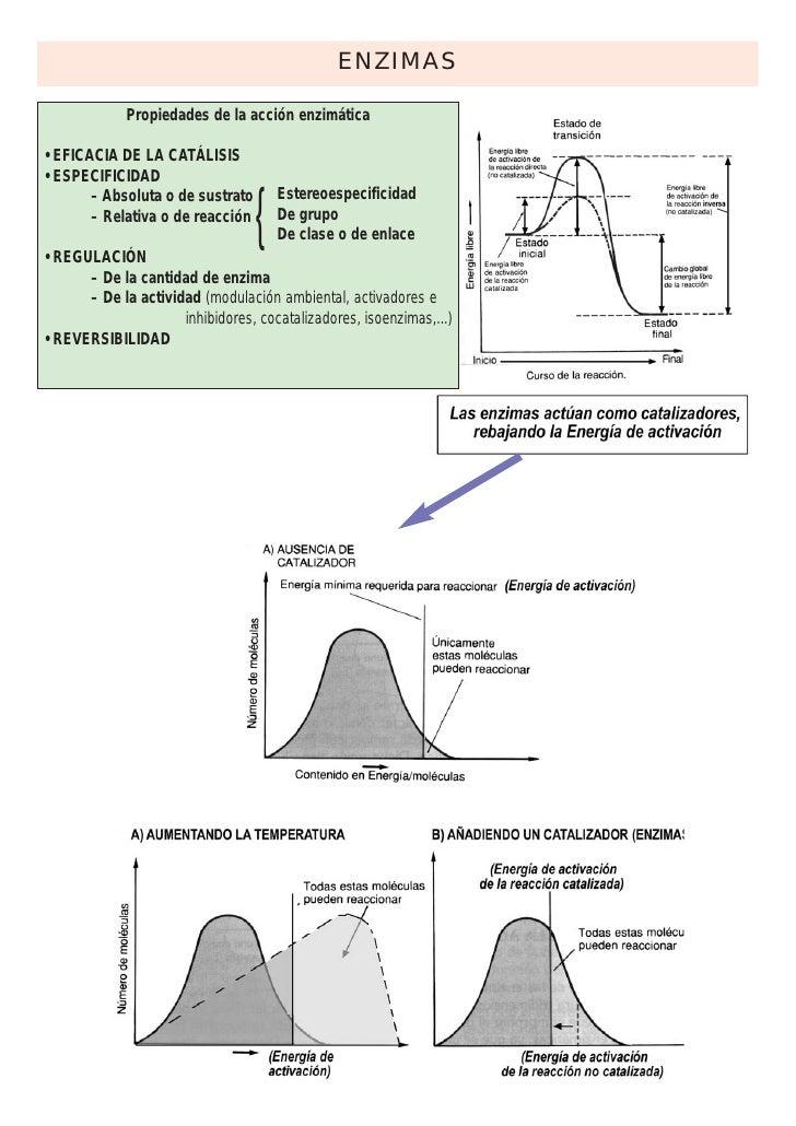ENZIMAS               Propiedades de la acción enzimática  • EFICACIA DE LA CATÁLISIS • ESPECIFICIDAD        – Absoluta o ...