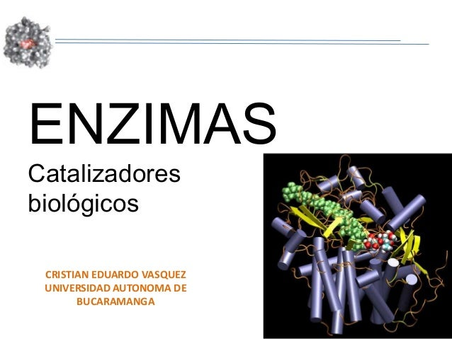ENZIMASCatalizadoresbiológicos CRISTIAN EDUARDO VASQUEZ UNIVERSIDAD AUTONOMA DE       BUCARAMANGA