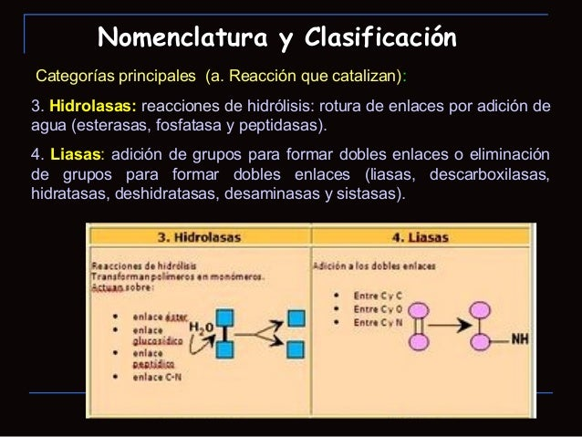 Categorías principales (a. Reacción que catalizan):3. Hidrolasas: reacciones de hidrólisis: rotura de enlaces por adición ...